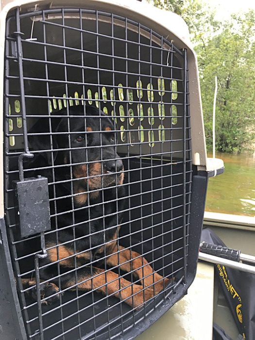 Image: Dogs rescued from a home in Dickinson, Texas during the flooding on Aug. 29, 2017.