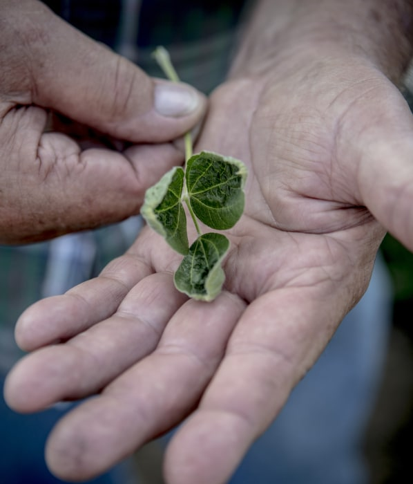 Image: Soybean farmer
