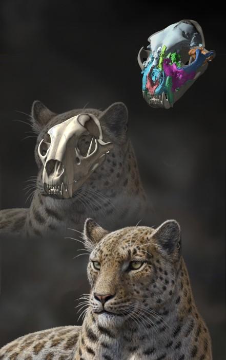 Image: Panthera blytheae