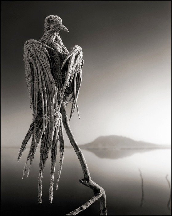 CALCIFIED DOVE, LAKE NATRON, 2010 -- From Nick Brandt's book Across The Ravaged Land (Abrams 2013)
