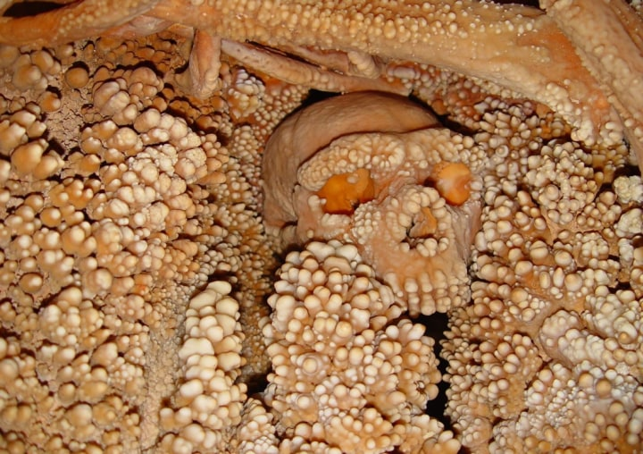 Image: Remains of the so-called Altamura Man, now considered a Neanderthal