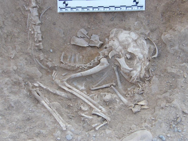 Egyptians Buried Cats Over 6,000 Years Ago
