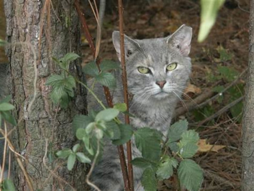 Beware of Feral Cats in France
