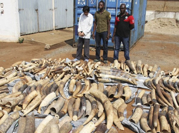 A Vietnamese man identified as Huu Dinh Khao, left, and two Togolese men stand next to a haul of ivory tusks after being seized by security forces at the port of Lome January 28, 2014. The three men were arrested by Togolese security forces who seized 1.
