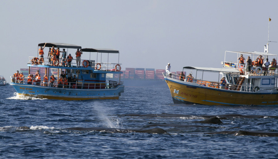 Tourists return to Sri Lanka for whale watching
