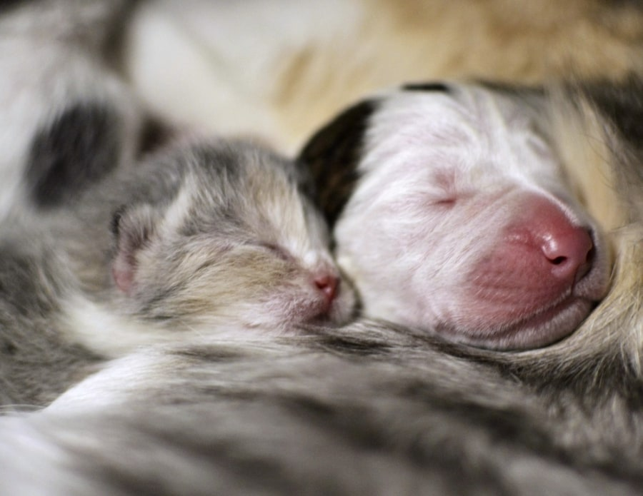 Cat nurses week-old, orphaned pit bull puppy