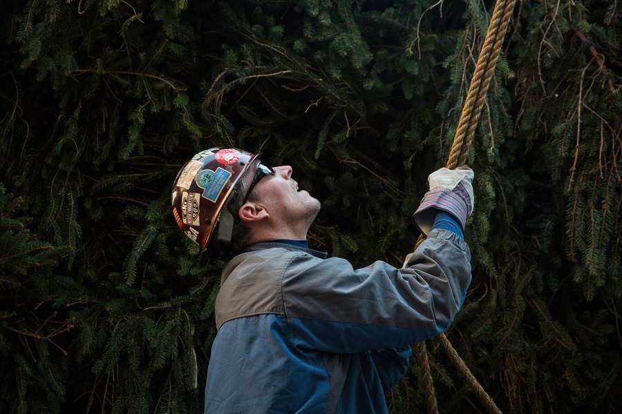 That's one big tree! Watch as the Christmas tree is erected in Rockefeller Center