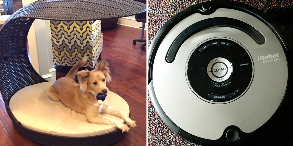 When Roomba met dog poop: Man's 'poopocalypse' goes viral