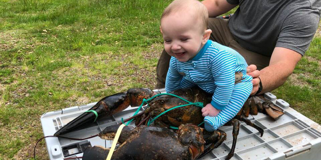 Baby poses on top of a 17-pound lobster for photo shoot