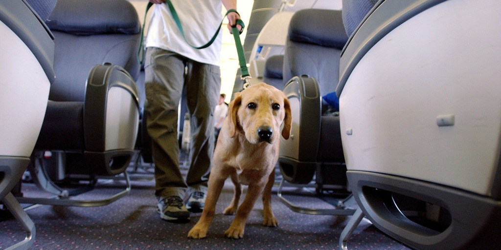 Emotional support animals might get banned from planes