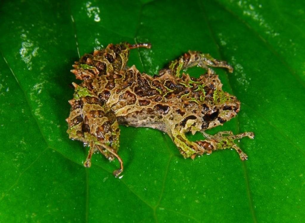 влажные лягушачья кожа картинки собрали