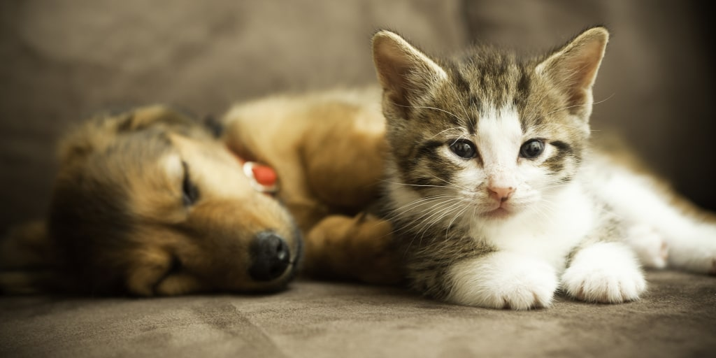 California will soon require pet stores to only sell rescue