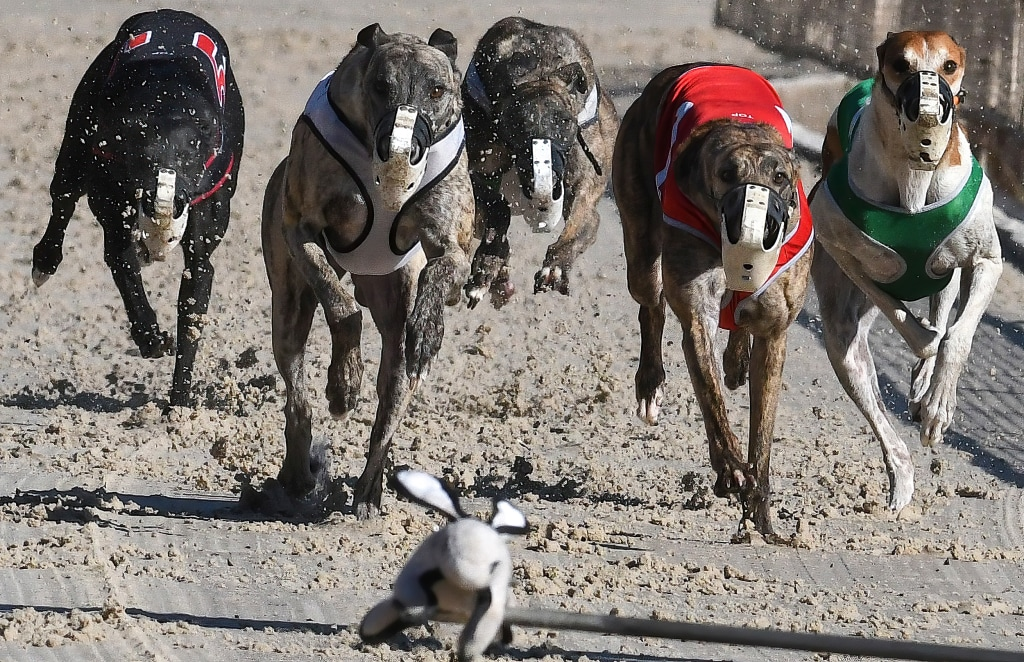 Dog racing betting options for the derby eurovision betting odds ladbrokes 49s