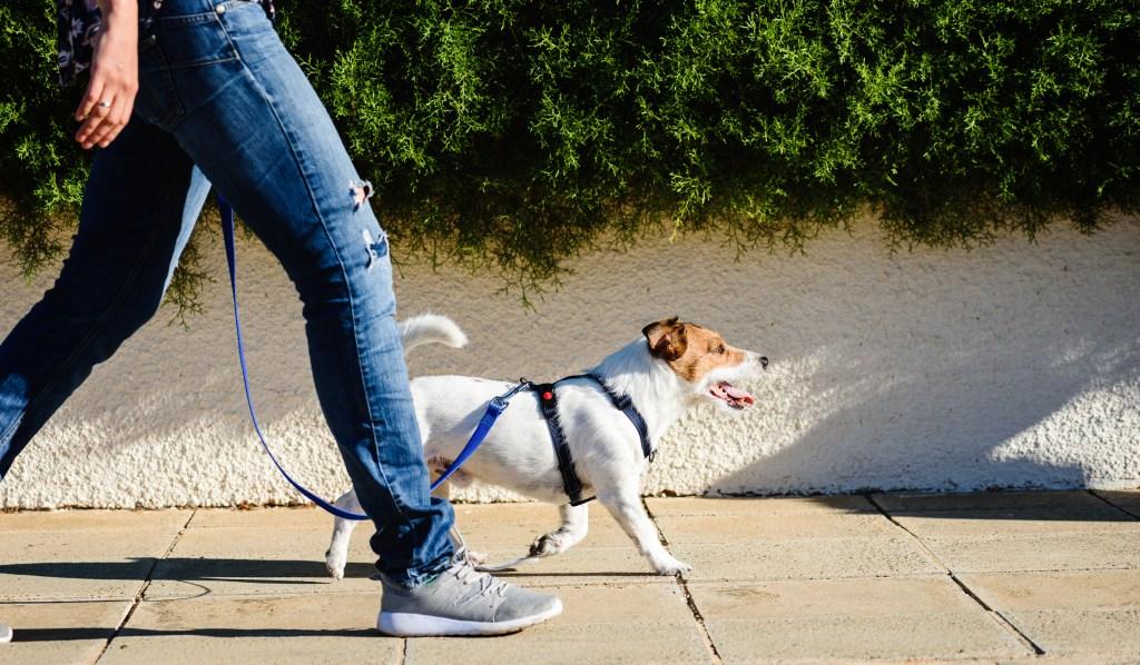 Matching Leash and Collar Set Dog Lead Light Gray Rope Dog Leash Rope Dog Leash and Collar Set in Gray Nautical Dog Leash