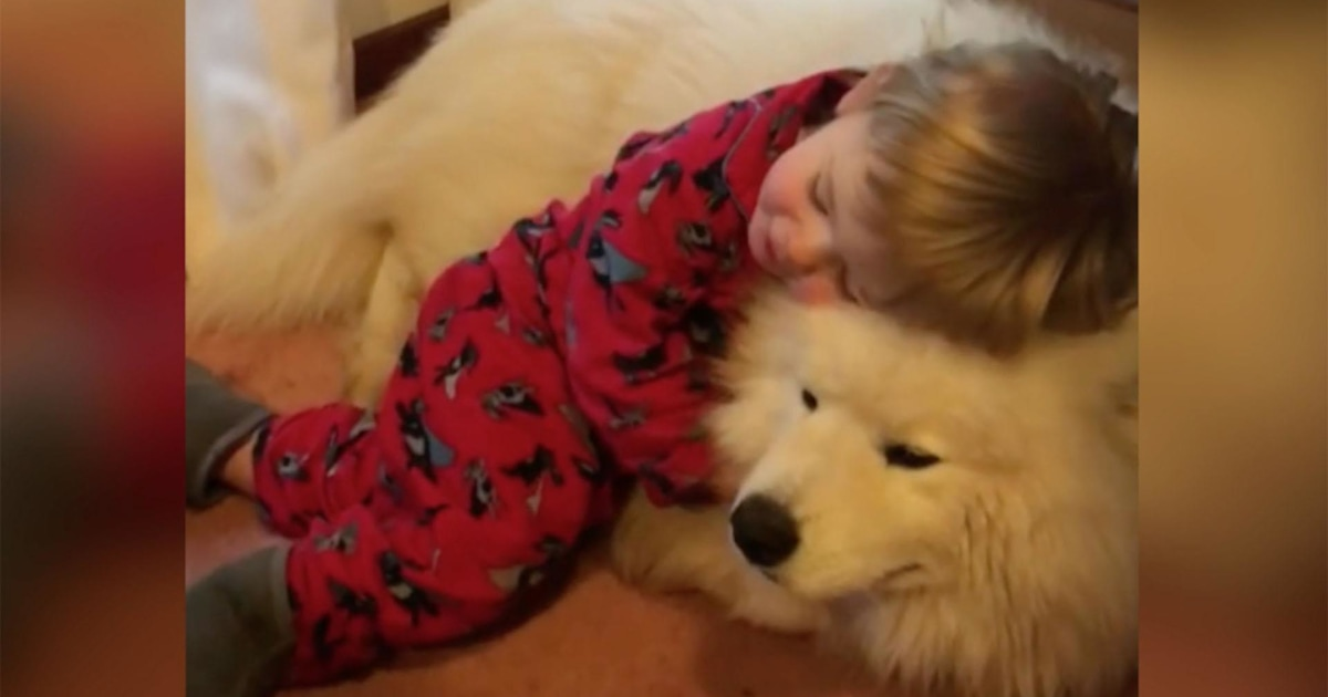 Baby And Samoyed Dog Are The Most Adorable Cuddle Buddies