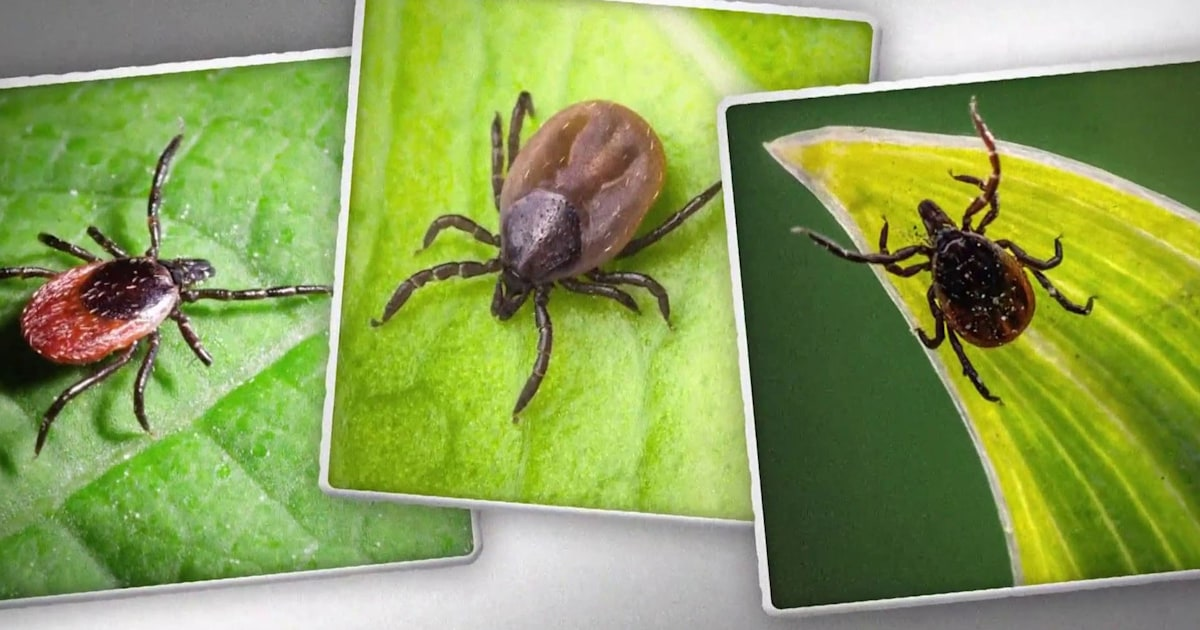How to protect from ticks this summer