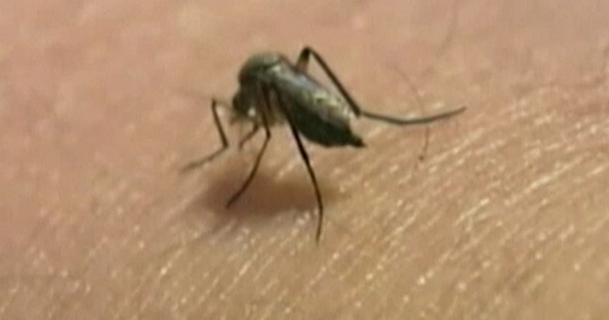 Remedies to keep mosquitoes, other summer pests from biting