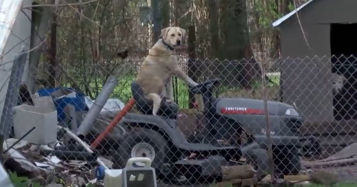 Coolest dog ever just hangs out on lawnmower during live broadcast