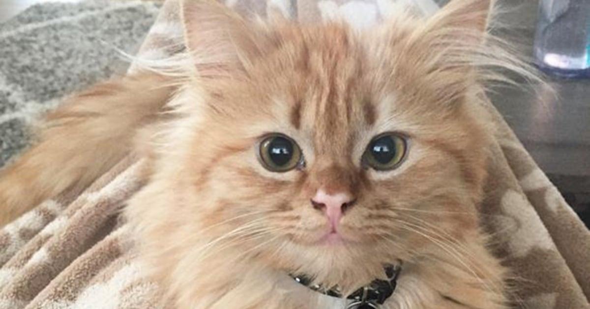 'Rey' of sunshine! This 'smiling' kitten will brighten your day