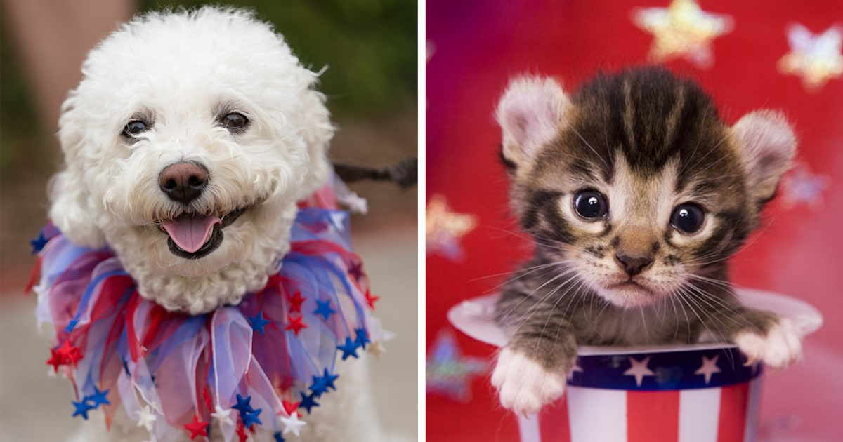 July 4th fireworks: How to protect your dog, cat or pet