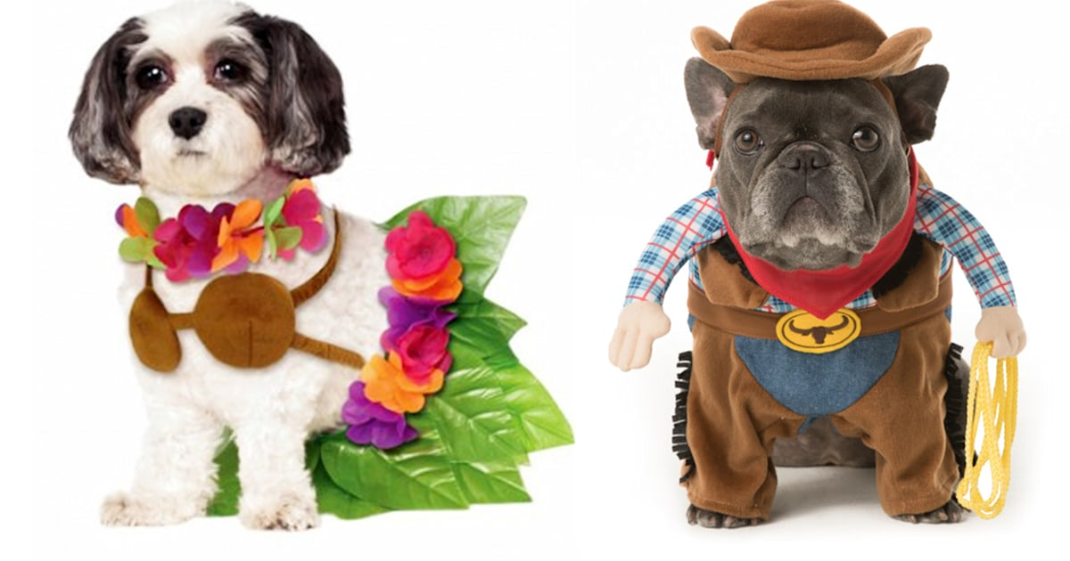 Halloween dog costume ideas: 32 easy, cute costumes for your