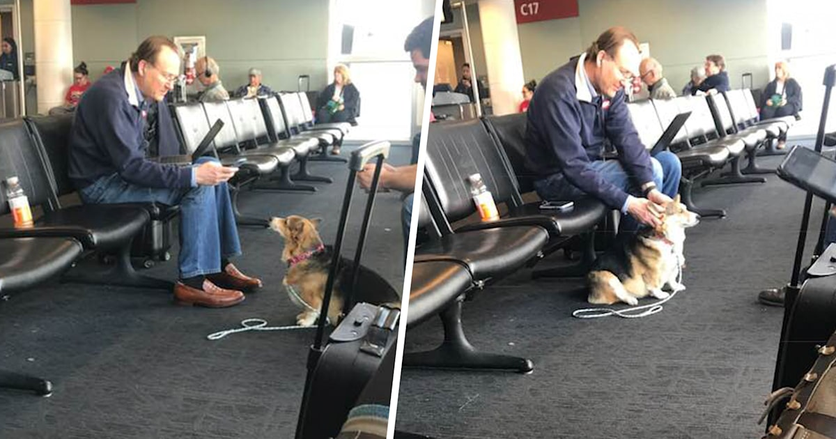 Woman finds her corgi comforting grieving stranger in the airport