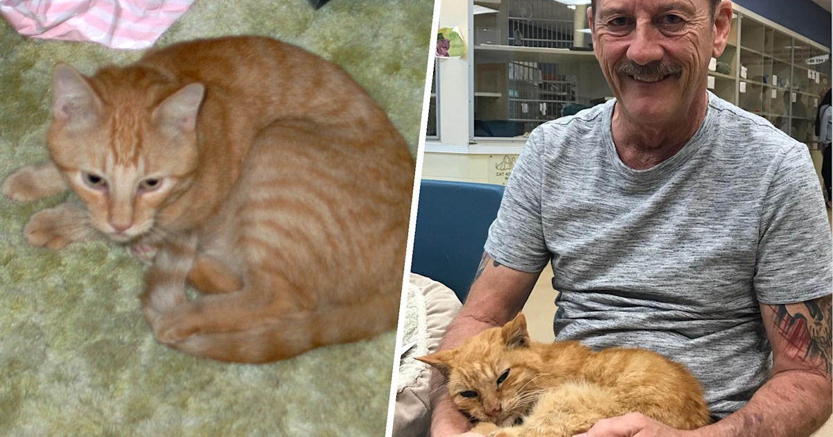 ab084d7a16f9 Missing cat reunites with owner after 14 years thanks to microchipping