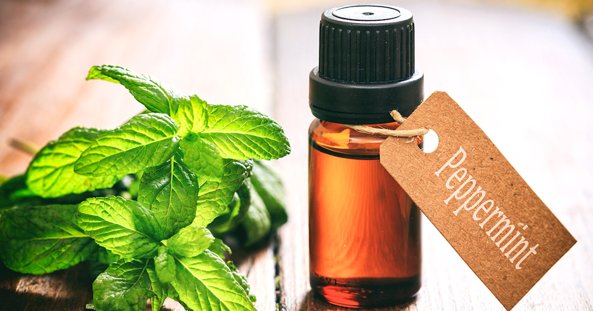 Peppermint oil uses and benefits for beauty, health and home cleanliness