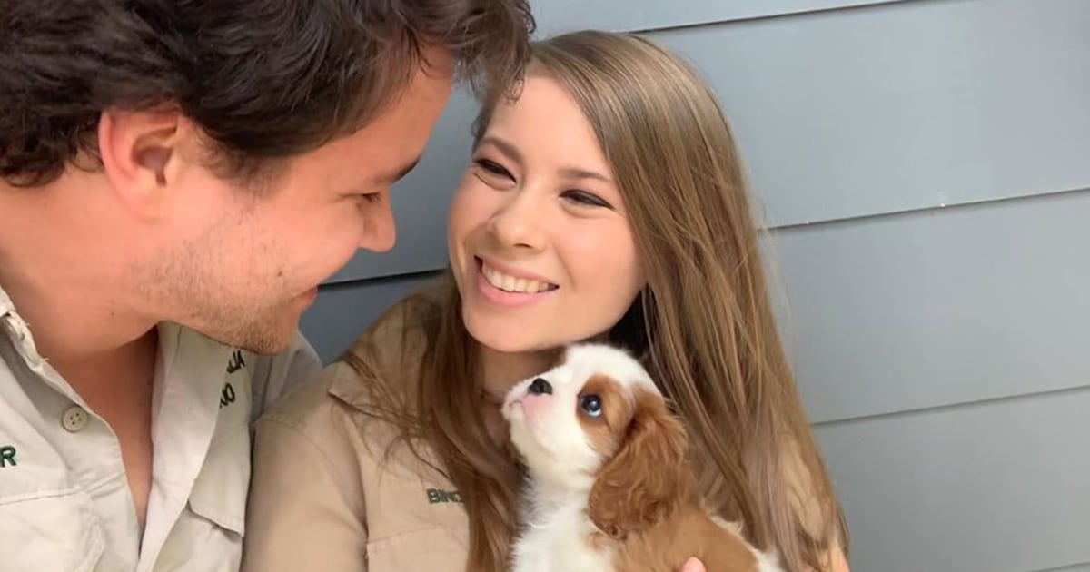 Bindi Irwin and fiancé Chandler Powell introduce their 'gorgeous' new puppy