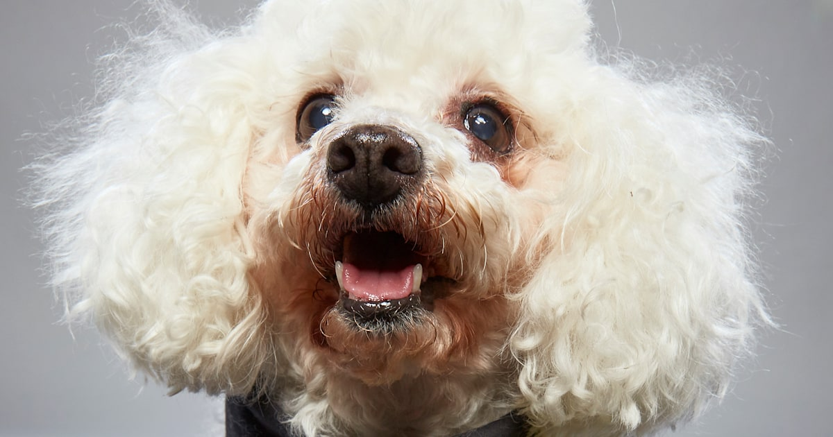 Abandoned for being 'too old,' 16-year-old dog finds fame during Super Bowl