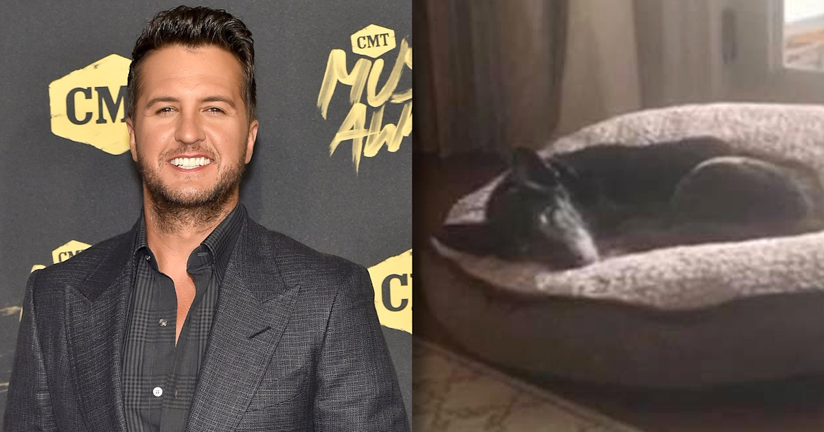 Luke Bryan adopts 18-year-old rescue dog