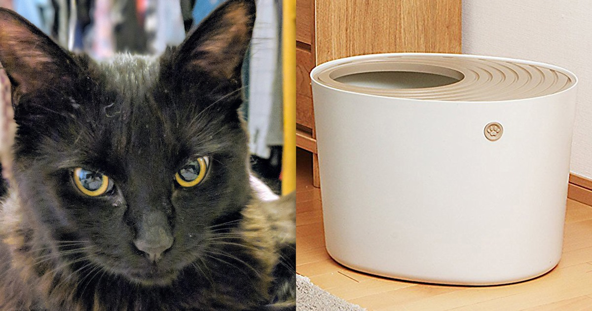 The best cat litter box is a top-entry litter box
