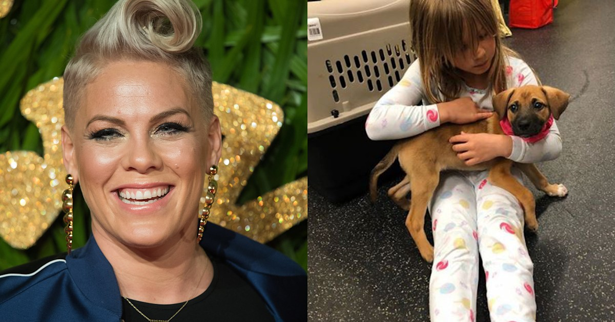 Pink welcomes a rescue puppy to her family — and gives him an adorable name