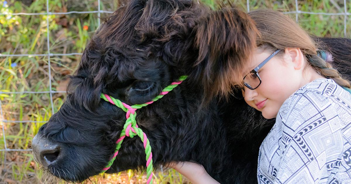 When Mazie met Blonnie: 'Oreo cow' helps girl get through health crisis