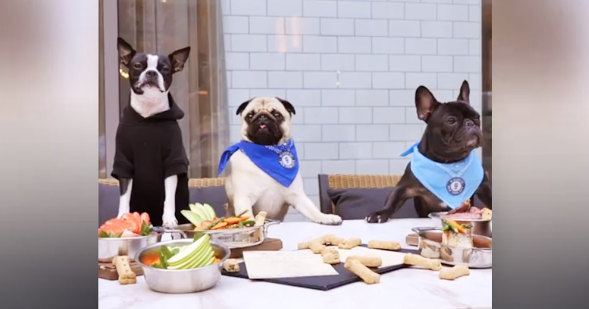 Bone appétit! Pet-friendly restaurant offers $40 steak for your dog