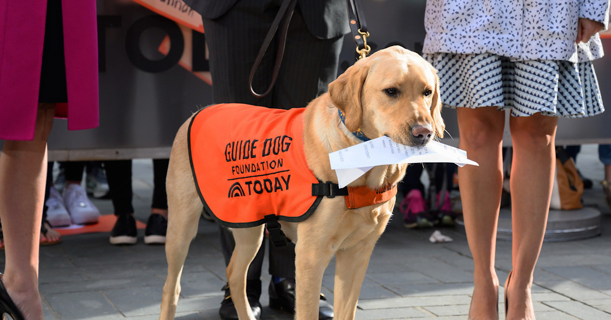 Sunny updates us on what he's learned in his guide dog training