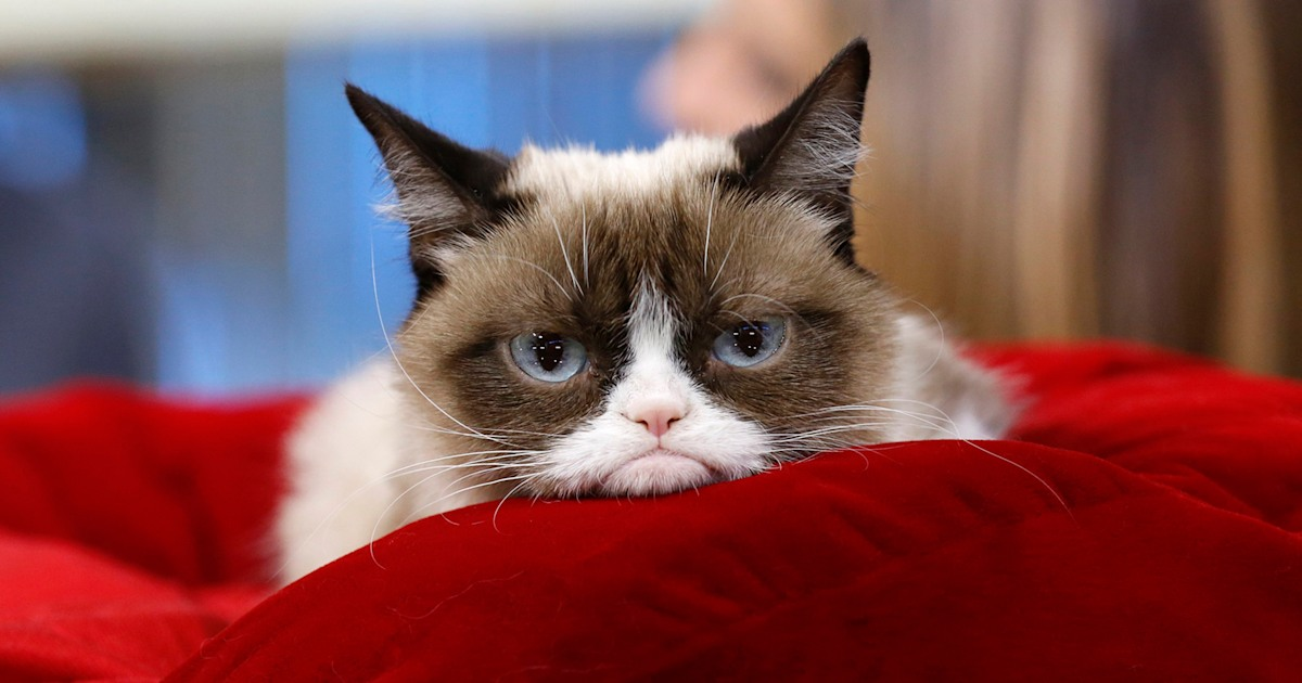 Viral sensation Grumpy Cat has died at 7