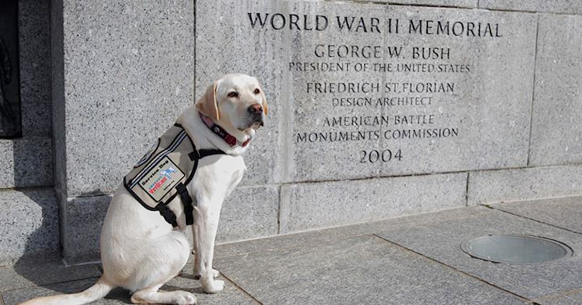 George H.W. Bush's former service dog, Sully, shares sweet tribute on Memorial Day