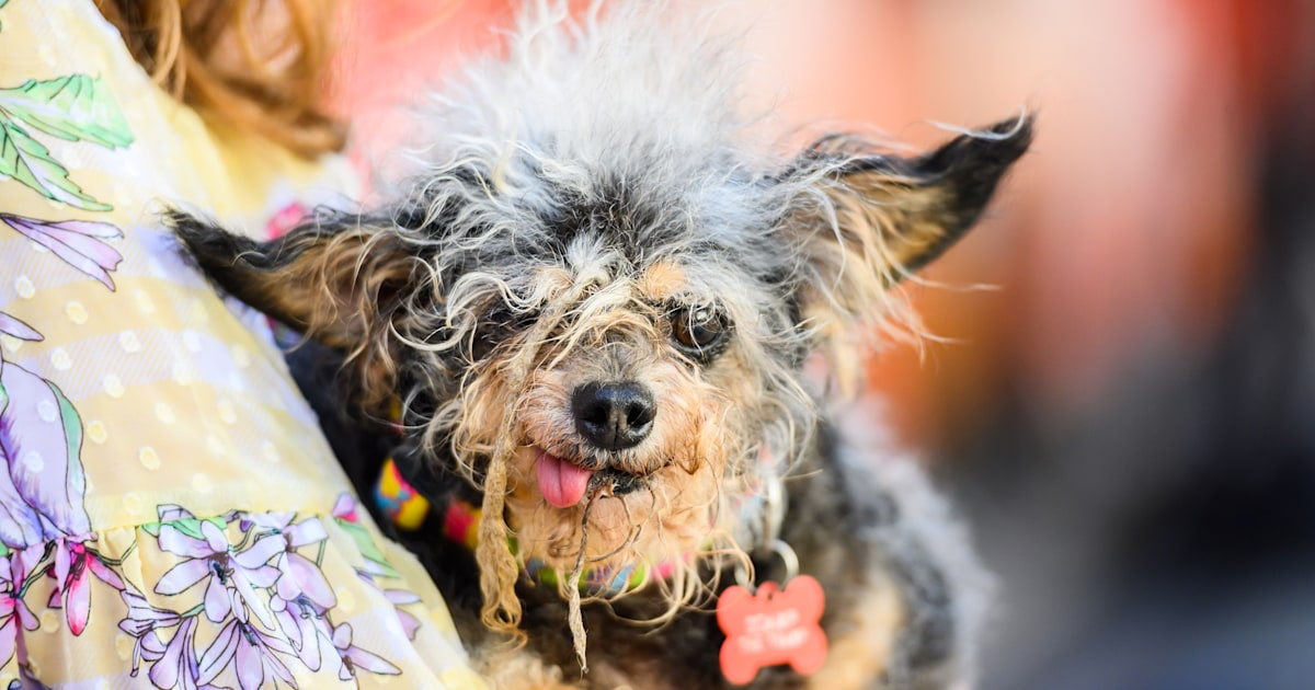 Scamp the Tramp is 2019's World's Ugliest Dog