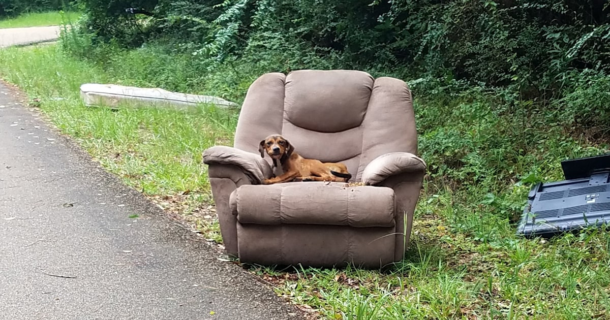 Puppy dumped with chair, TV nearly starved waiting for owner