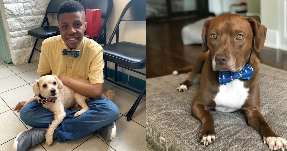 12-year-old boy designs bow ties to help pets get adopted