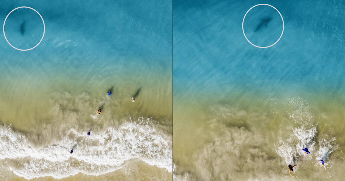 Florida dad's chilling beach photos capture shark lurking near his kids