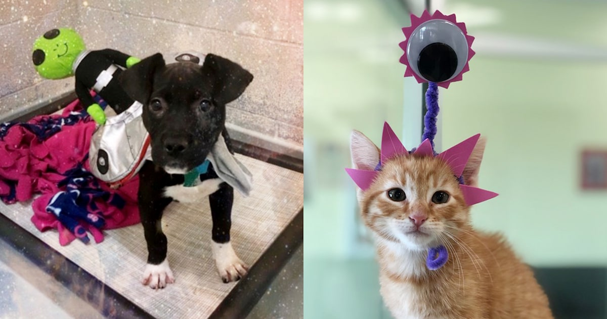 Rescue animals dress up as aliens — and it's clearing these shelters