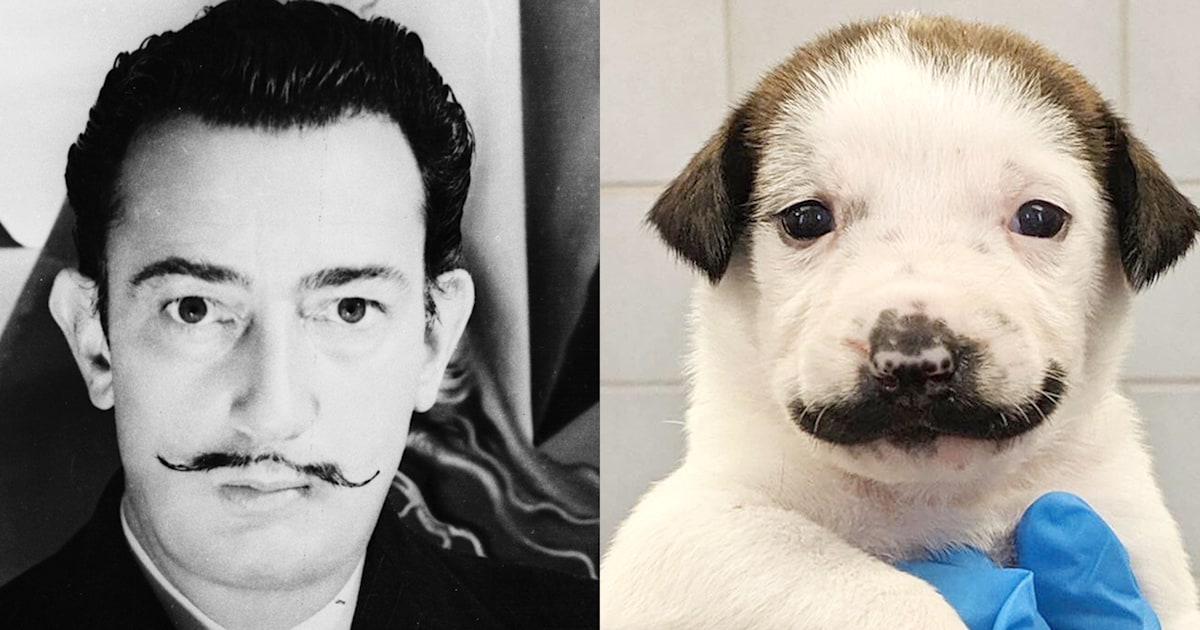 'Mustache puppy' Salvador Dolly looks exactly like a certain artist
