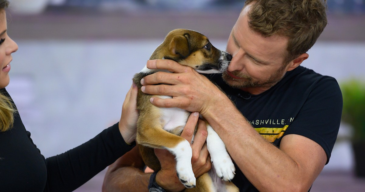 'This is meant to be': Dierks Bentley adopts a puppy live on TODAY
