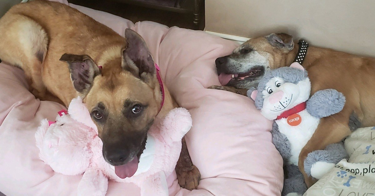 Heartwarming adoption gives 3 senior dogs a forever home