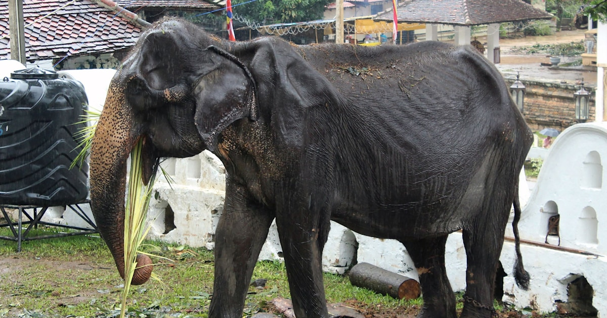 Photos of emaciated elephant in Sri Lanka spur calls for action