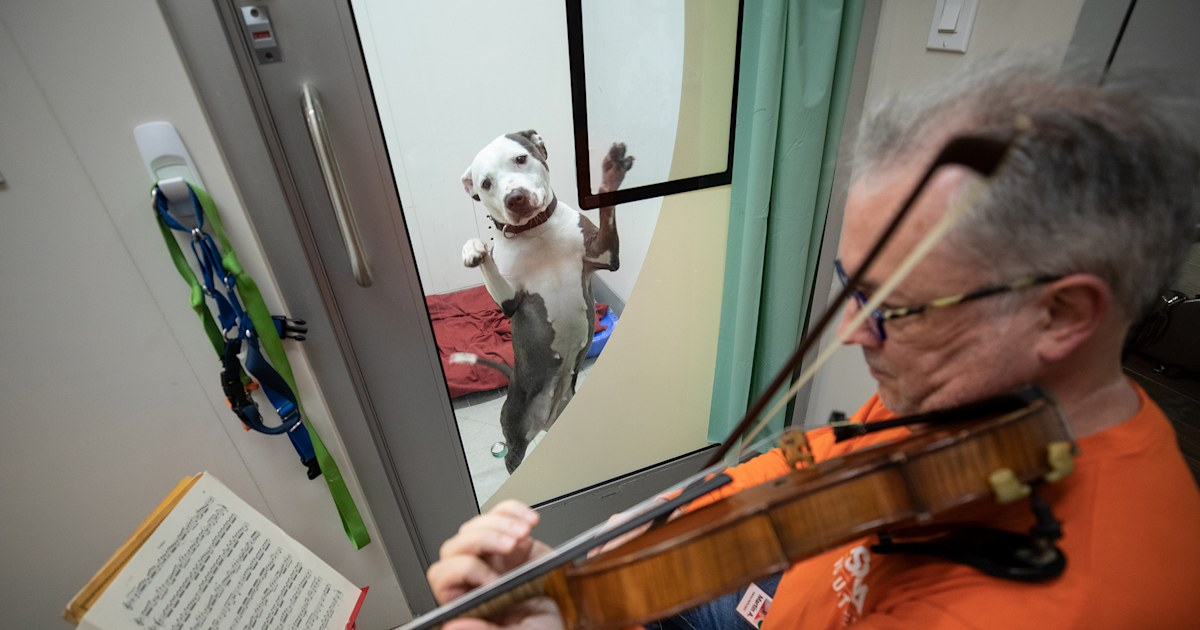 Violinist's music calms dogs recovering from abuse at ASPCA