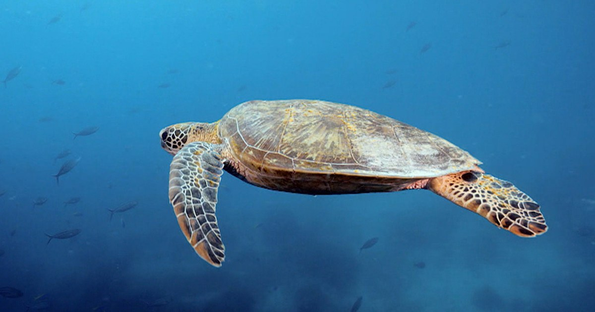 You can track the sea turtle named after TODAY — here's how