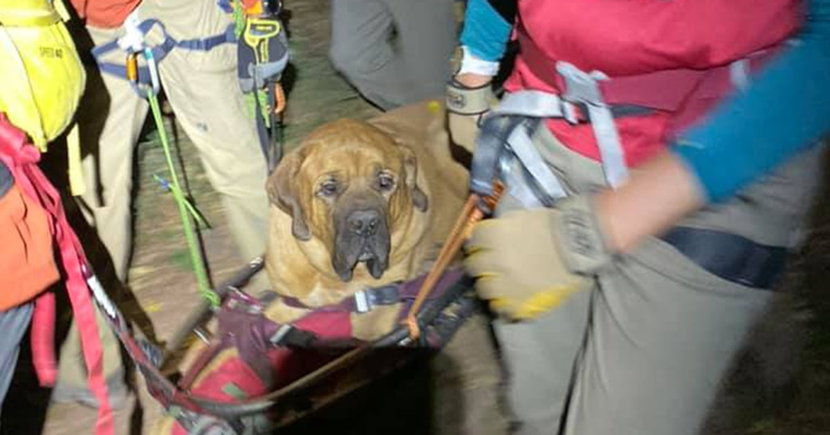 Rescue team carries 190-pound dog from Utah canyon trail to safety